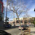 Grace Mendez Tree Outside My Window