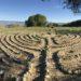 Grace Mendez Chartres Labyrinth