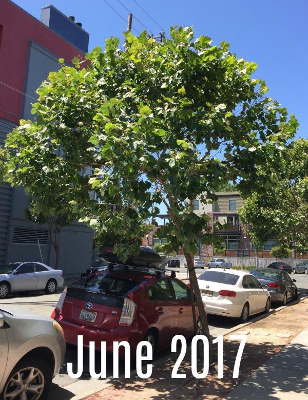 Grace Mendez Tree Outside My Window 06 2017